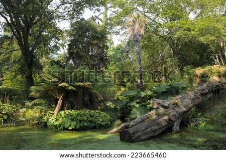 Pond and fallen tree in Abbotsbury gardens, Dorset - stock photo