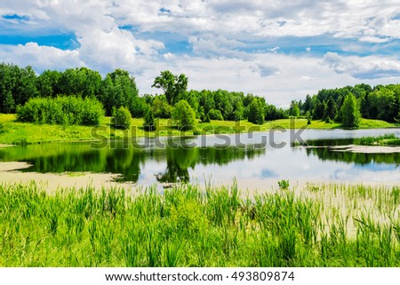 pond and forest