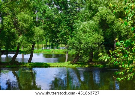 Pond covered with mud in the park with a tree on a background of blue sky