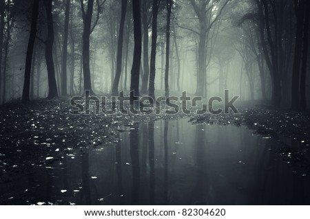 pond in a forest with fog - stock photo