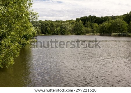 pond in a forest with trees
