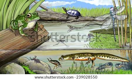 Pond life - stock photo