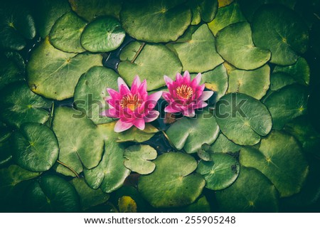 pond scenery with water lilly - stock photo