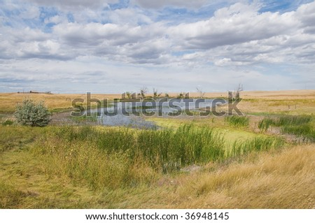 Pond surrounded by wild grass, Oelrichs, South Dakota - stock photo