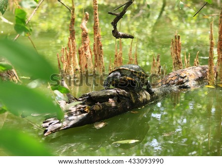 Pond Turtle Heating In The Sun On Wood Stick In Lake Water - stock photo