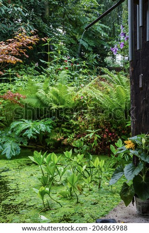 pond with a different green plants - stock photo