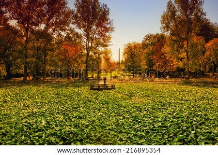 Pond with green water lilies at the park - stock photo