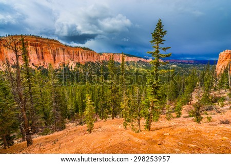 Ponderosa Pine Trees Bryce Canyon National Park