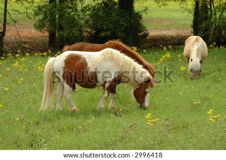 ponies - stock photo