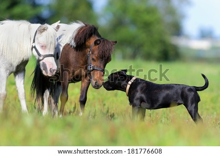 Ponies and dog in field - stock photo