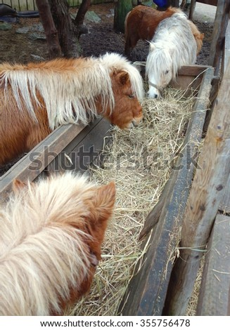 Ponies at a farm in Ontario, Canada - stock photo