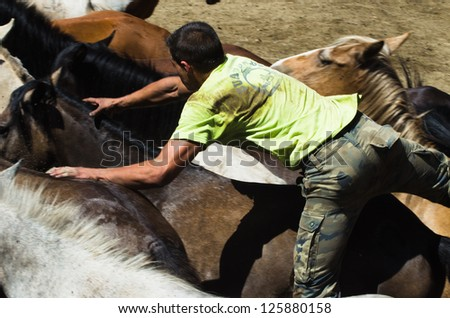 "PONTEVEDRA, SPAIN-AUG 5: Unidentified horseman tries riding without a saddle, a wild horse, to cut the mane, in a traditional ""Haircut to the beasts"" on August 5, 2012 in Pontevedra, Spain."
