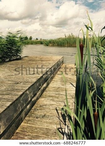 Pontoon surrounded by rushes on a fresh waterway