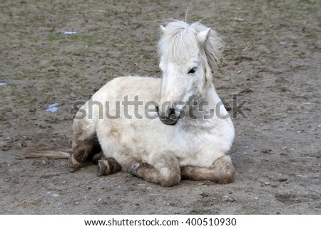 pony - stock photo