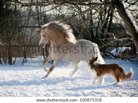 pony and dog - stock photo