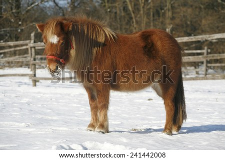 Pony horse in winter corral rural scene - stock photo