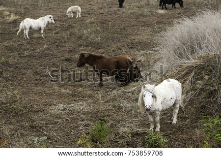 Pony in natural field, livestock and stable, horses