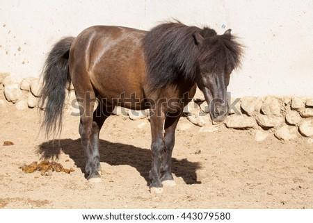 Pony on nature, portrait of a pony, brown pony - stock photo
