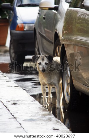 Poor frightened stray doggy hiding behind the car - stock photo