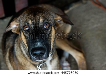Poor Stray dog are captured  - stock photo