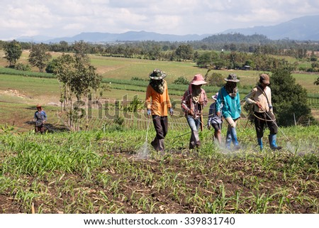 POP PRA, TAK, THAILAND - NOVEMBER16, 2015 : Unidentified Myanmar migrant workers are helping to spray herbicide in the corn plantation at Pop Pra, Tak, Tak, Thailand