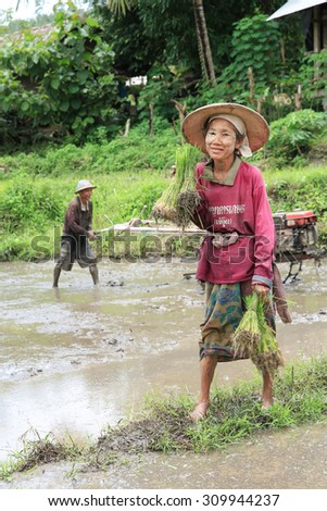 POP PRA THAILAND - JULY31 : Several residents ages together to help the paddy fields in the valley Ban Huay Nam Nak, Pop Pra province, Thailand on JULY31 ,2015