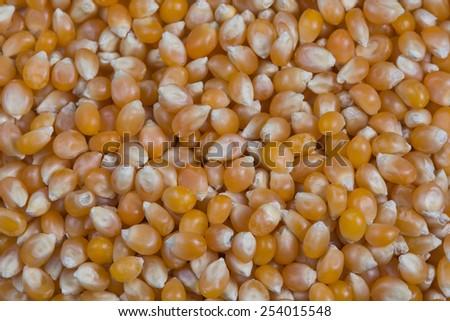 Popcorn kernels background - stock photo
