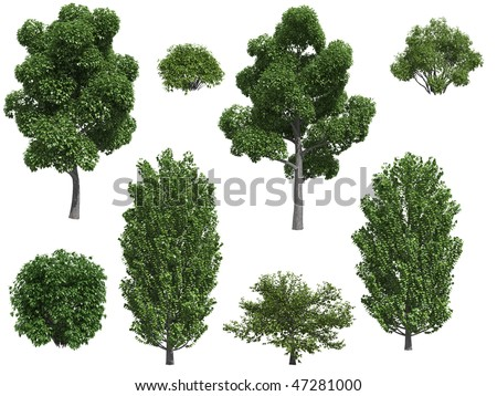 Poplar trees and bushes isolated on white background - stock photo