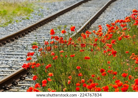 Poppies along the railway line - stock photo