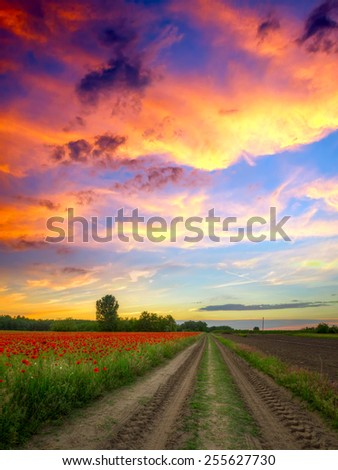 Poppies field at sunset in summer, in Hungary