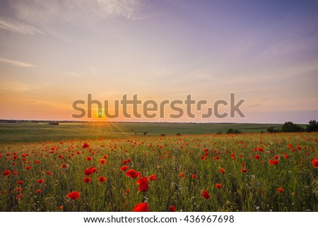 Poppies field on the background of the evening sky,Wildflowers poppies  - stock photo