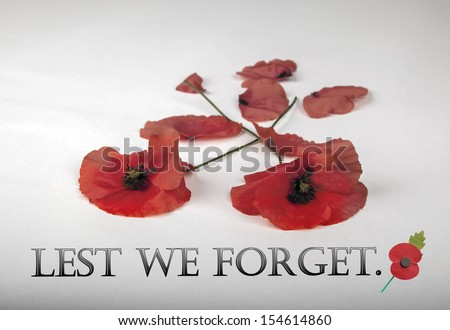 Poppies - for Remembrance Day - remember - stock photo