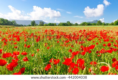Poppies on the Swabian Alps - Germany
