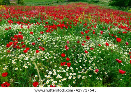 poppy and wild flowers