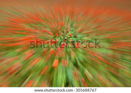 Poppy field abstraction, soft focus