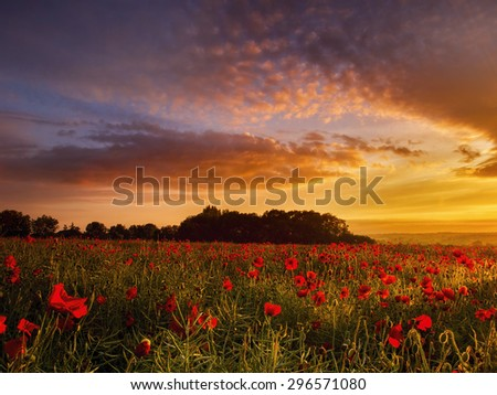 Poppy field at sunrise
