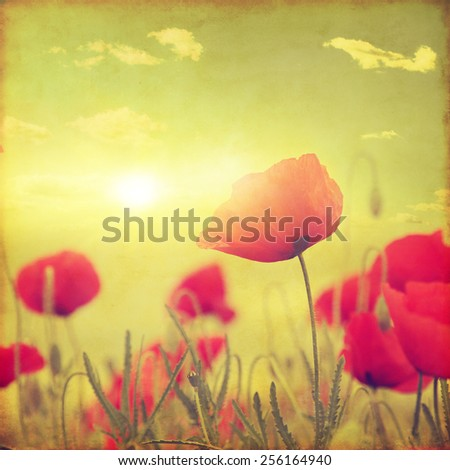 Poppy field at sunset in grunge style. - stock photo