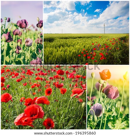 Poppy field collage