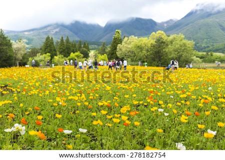 Poppy flower garden crowded with tourists - stock photo