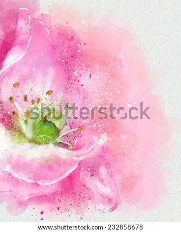 poppy flower watercolor illustration - stock photo