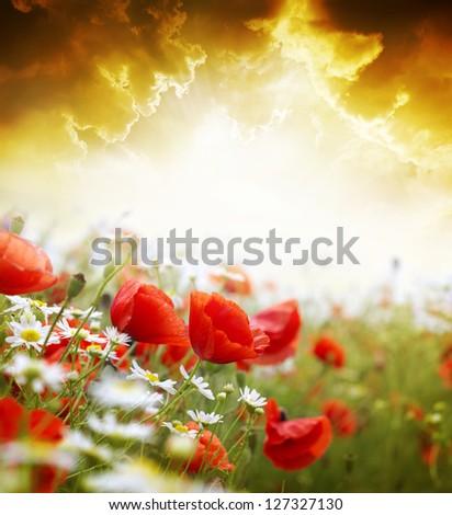Poppy flowers in the sky - stock photo