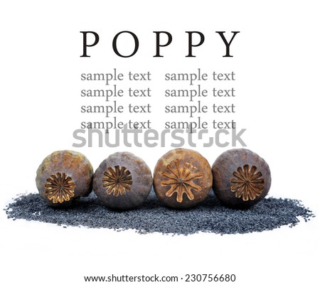 Poppy heads and seeds isolated on white background - stock photo