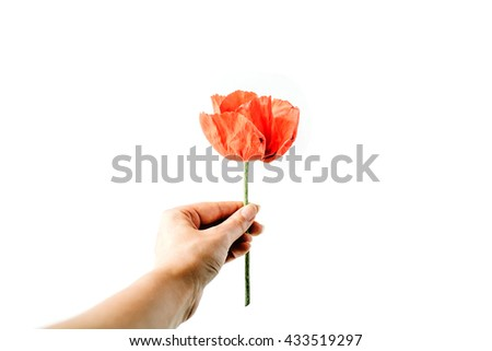 Poppy in girl's hands on white background. Flat lay, top view
