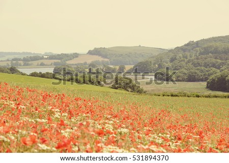 Poppy meadow over looking a Cornish valley.