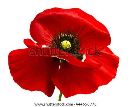 poppy red background - photo #46