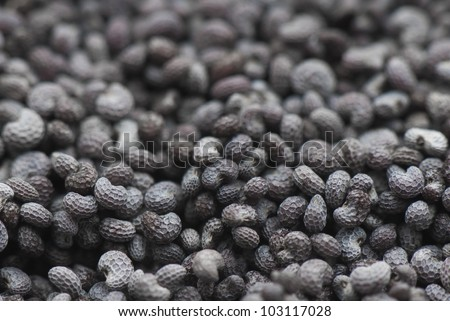 Poppy seeds are shot in close-up - stock photo