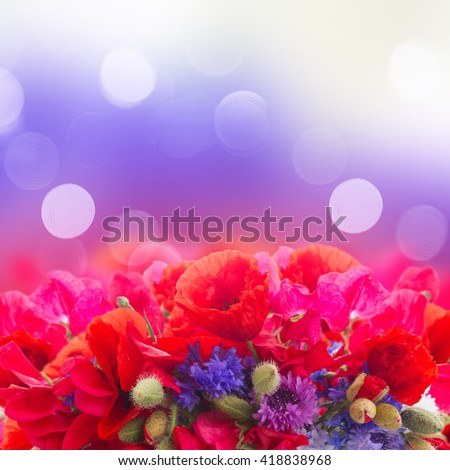 Poppy, sweet pea and corn flowers border  on bokeh background with copy space - stock photo