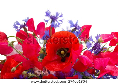 Poppy, sweet pea and corn flowers close up  isolated on white background - stock photo