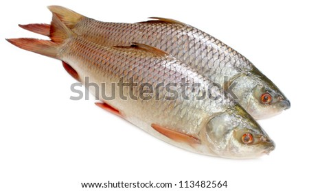 Popular Rohu or Rohit fish of Indian subcontinent - stock photo