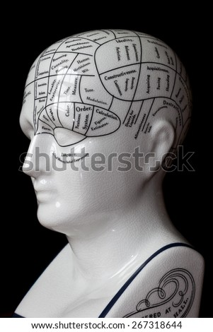 Porcelain phrenology head used in psychology.